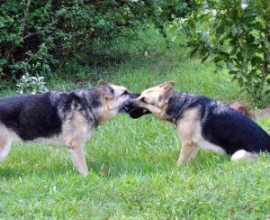 Beverly and Kismet Playing