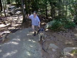 Sue walks through the forest with Kismet on her left and a hiking stick in her right hand.